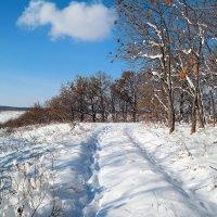 Хорошо бродить по зимнему лесу! :: Андрей Заломленков