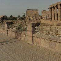 Египет :: kuta75 оля оля