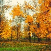 Осенний парк 3 :: Вячеслав Баширов