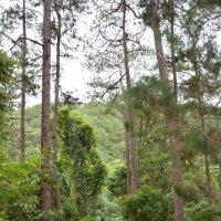 Джунгли возле водопада Датанла. :: Paparazzi