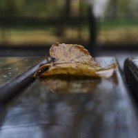 Осень на лавочке... :: НикЛеод