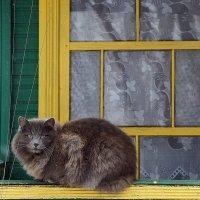 О чем мечтает кошка? :: Елена Павлова (Смолова)