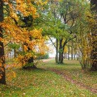Осень в пасмурный день 2 :: Виталий