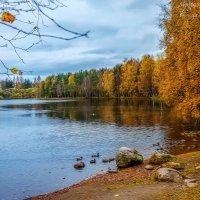 Утки на озере :: Евгения К