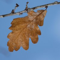Осень в небе голубом.... :: Tatiana Markova