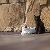 Черное и белое ... :: Евгений Khripp