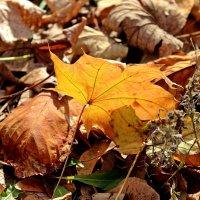 Осенний лист :: Татьяна Пальчикова