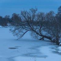 Дерево склонилось к ледяной Дубне. :: Виктор Евстратов