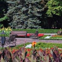 Городские цветы. :: Vladimir Lisunov