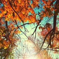 В лучах осеннего солнца :: Оксана Н.