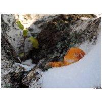 ноябрьский натюрморт с грибом :: sv.kaschuk