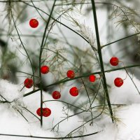 Красное и зелёное на белом :: Исаков Александр
