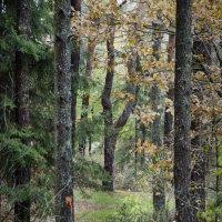 Ноябрьский лес :: Kliwo
