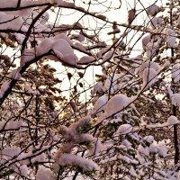 природа :: Валерия Воронова