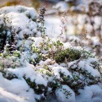 Первый снег :: Любовь Б