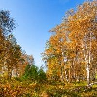 Осень прошедшая :: Анатолий Иргл