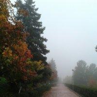 Утро туманное :: наталия