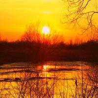 Закат на старом озерце :: Алла Новикова (Качуро)