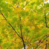 Осень.... :: Владимир Холодницкий