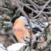Закуска снегом :: Дмитрий Ерохин