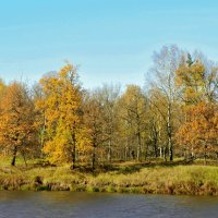 Осень -рыжая лисица :: Владимир Дементьев