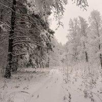 Зимние зарисовки :: Владимир Петухов