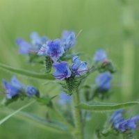 цветы :: Юлия Кожевникова