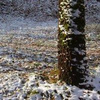 Первый снег :: Grey Bishop