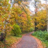 Осень в пасмурный день 15 :: Виталий