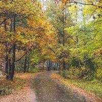 Осень в пасмурный день 11 :: Виталий