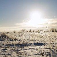 Пейзаж почти зимний... :: Елена Перевозникова