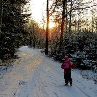 снежный ноябрь :: Светлана