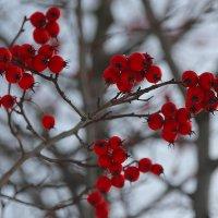 Осенне-зимний десерт.... :: Tatiana Markova