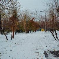 Зимний парк :: Света Кондрашова