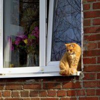 Сидит кошка у окошка :: Татьяна Смоляниченко