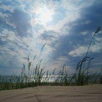 Солнце, воздух и вода :: Ася Зайцева