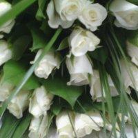 Белые розы... :: марина ковшова