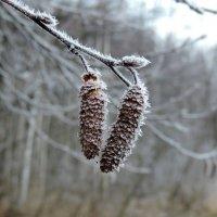 Первые заморозки :: Елена Якушина