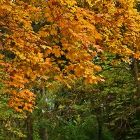 Осень... :: Светлана
