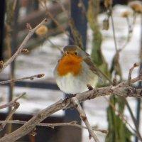 Птичка в центре города :: татьяна петракова
