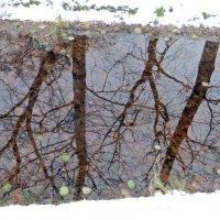 Зимняя акварель :: татьяна петракова