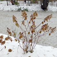 Вот и зима... :: татьяна петракова