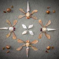 семена и ракушки :: Арвидс Гурскис
