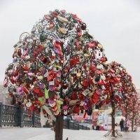 Дерево любви и верности :: Elena Ignatova