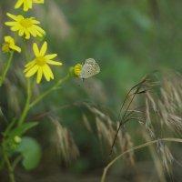 Бабочка :: Юлия Кожевникова