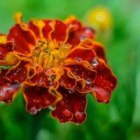 цветок :: Александр Байков