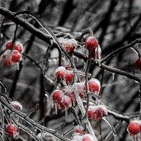Стеклянный лес :: Анастасия Осипова