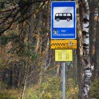 Ну, и где этот автобус? :: Виталий Латышонок