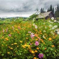 В огороде :: Татьяна Афанасьева