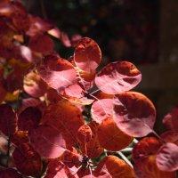 Осенние цвета. :: Лилия Дмитриева